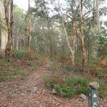 Heading through the bush (119509)