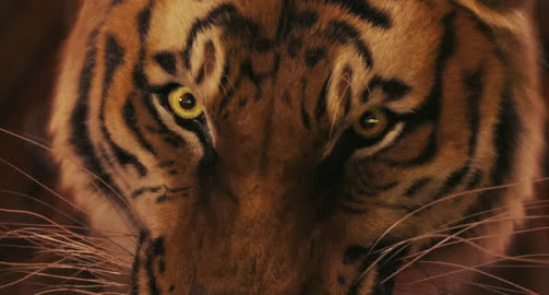 Life of pi 2012 hindi dubbed full movie free download for Life of pi in hindi