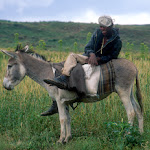 AD42 Man on Donkey.jpg