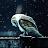 Freddie Last King avatar image