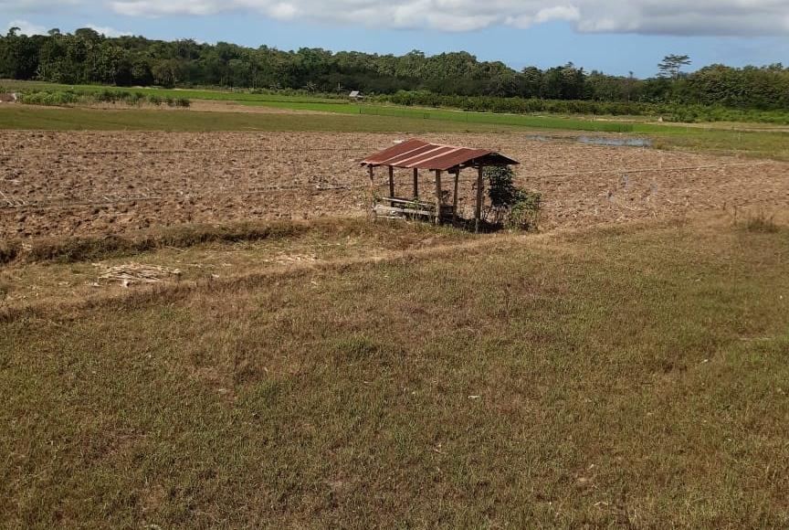 Jaga Ketersediaan Pangan, Petani Konawe Selatan Lakukan Percepatan Tanam Bersama Penyuluh
