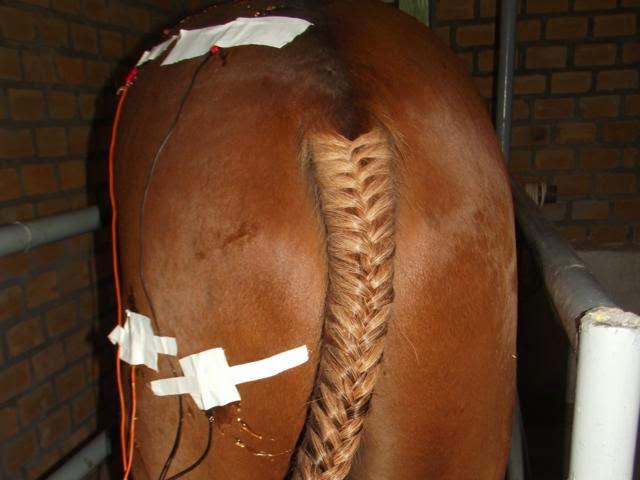 Imagem do serviço de Fisioterapia.