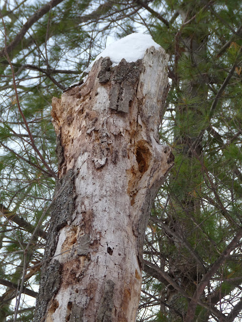 dead trees (snags) are essential features of healthy wildlife habitat