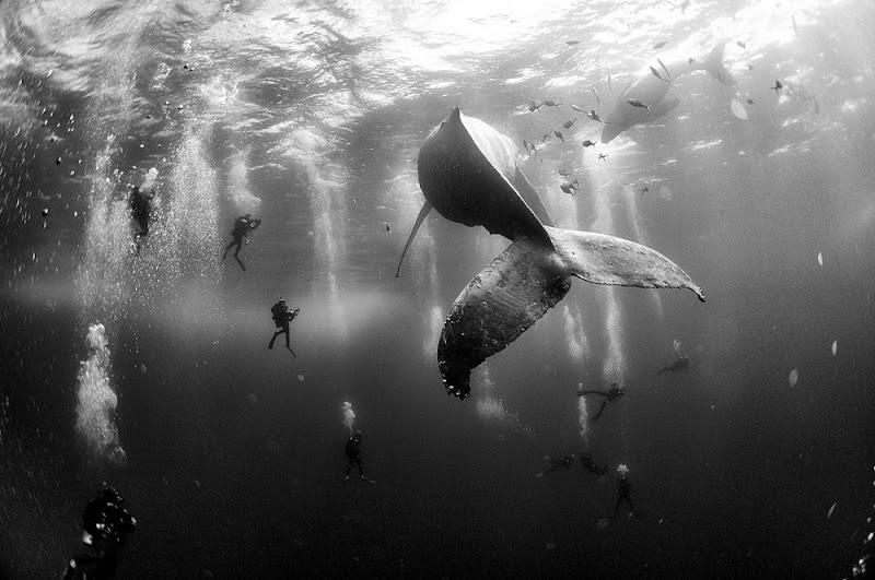 mergulhadores-e-baleia-09184351297084