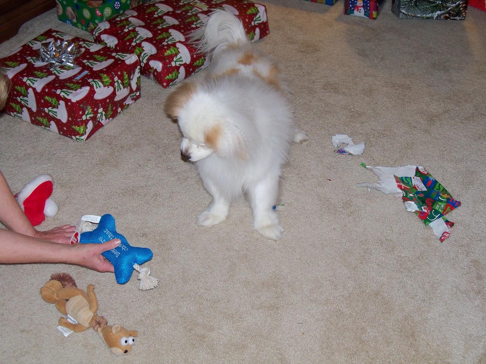 Christmas 2011 - 115_1057.JPG