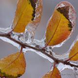 12-06-13 DFW Ice Storm - IMGP5430.JPG