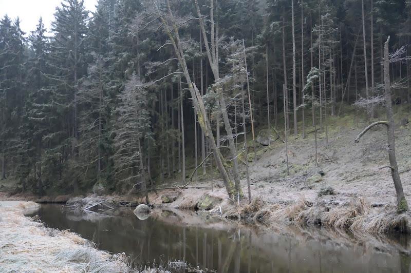20140101 Neujahrsspaziergang im Waldnaabtal - DSC_9832.JPG