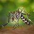 Bahia tem metade dos casos de chikungunya do Brasil