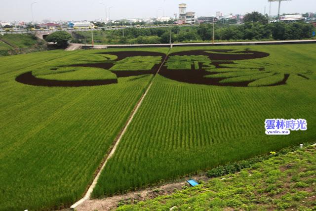 巨幅彩繪稻田耶, 因為2013農博在雲林!
