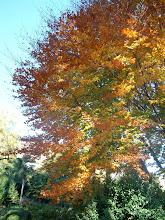 Photo: Colori d'autunno
