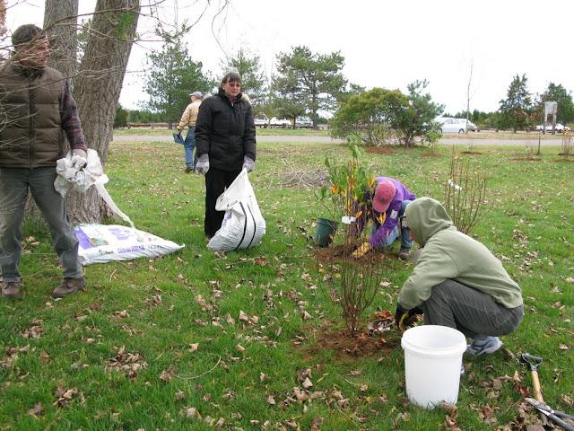Hammo Planting - Shannon Schiesser - IMG_4909.JPG