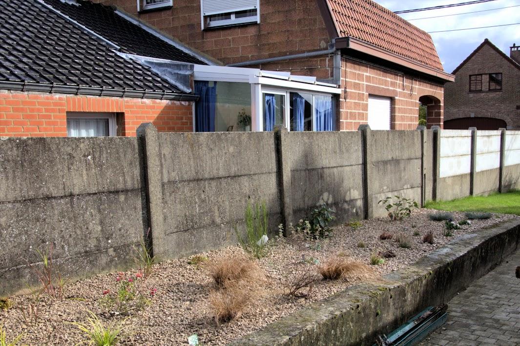 Nouvelle maison dit aussi nouveau jardin... IMG_0152