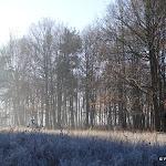 Bois de Jagny