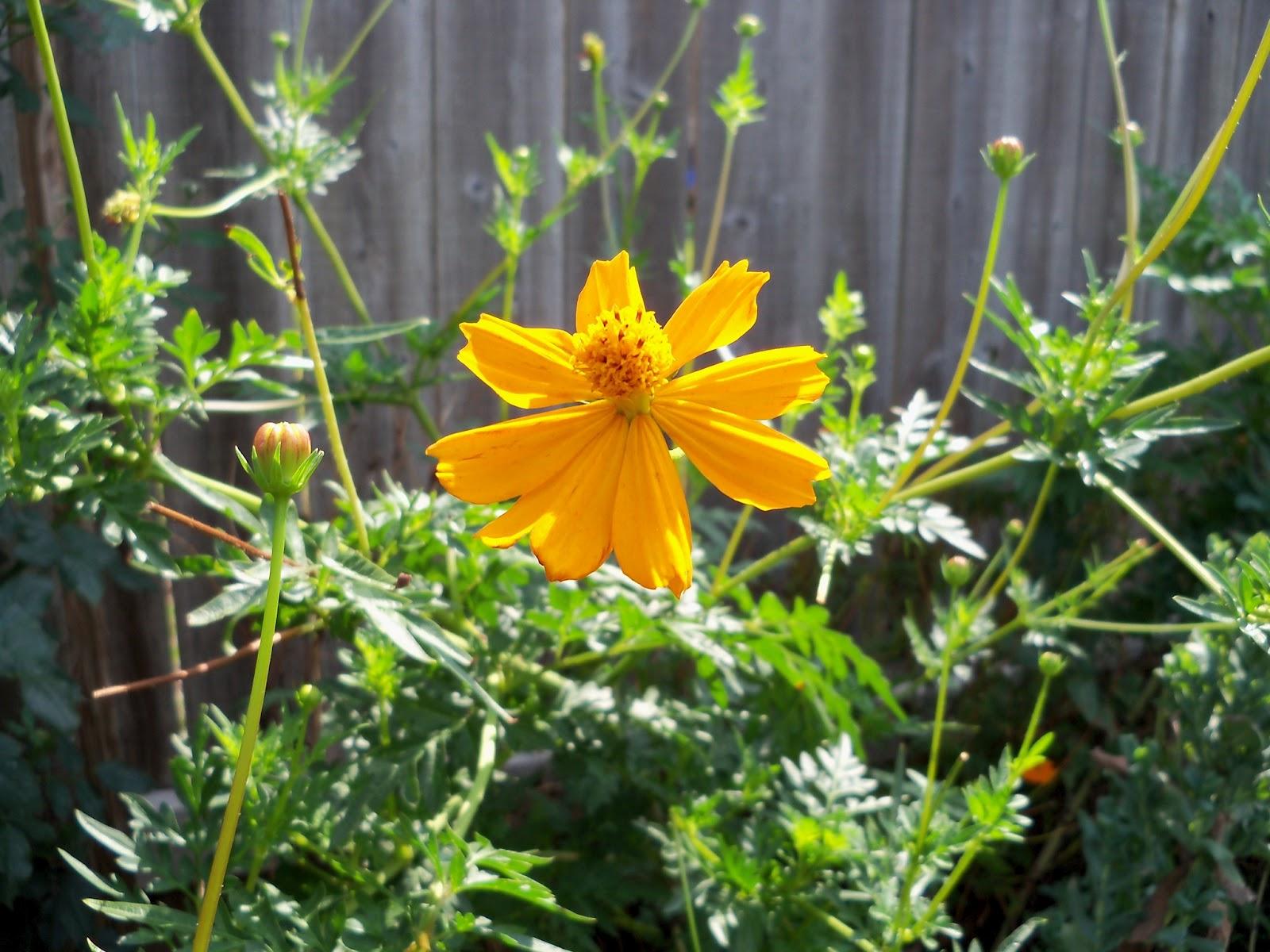 Gardening 2011 - 100_0075.JPG