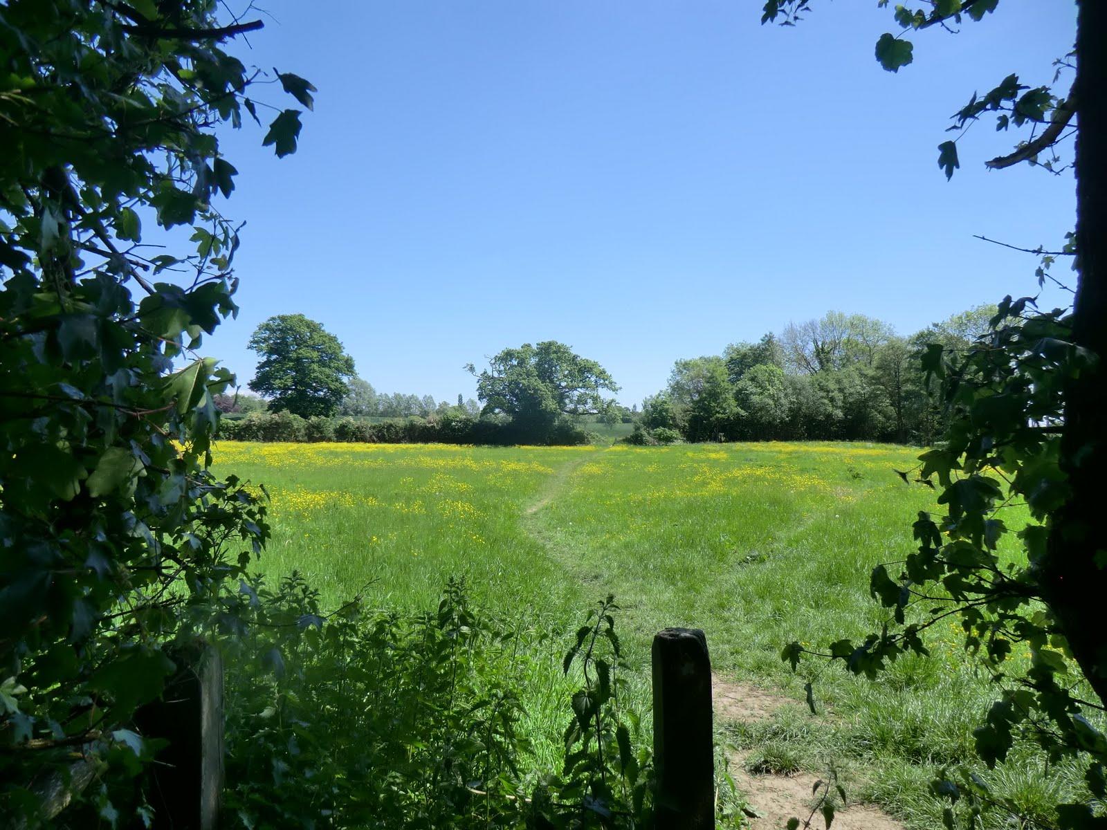 CIMG1388 Across a meadow towards Hadlow