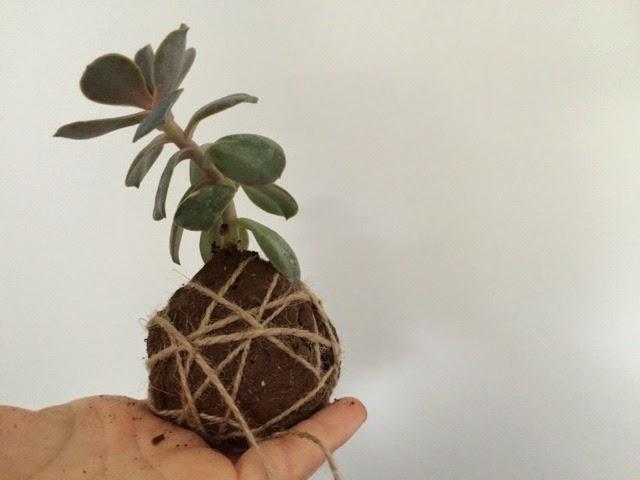 plante planter