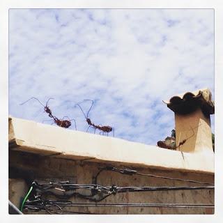 Mallorca Ameisen