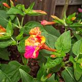 Gardening 2014 - 116_1973.JPG
