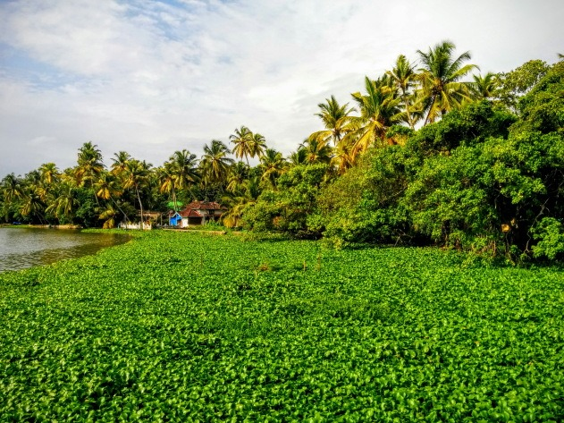 Backwater view from near Kochi, Kerala