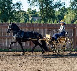 2015-08-22_Baroque_Horse_Show_10255.jpg