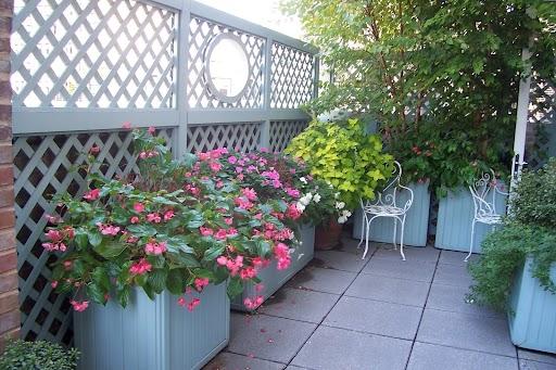 Summer color on a shady terrace.