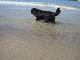 – Milla er ved at blive en vandhund