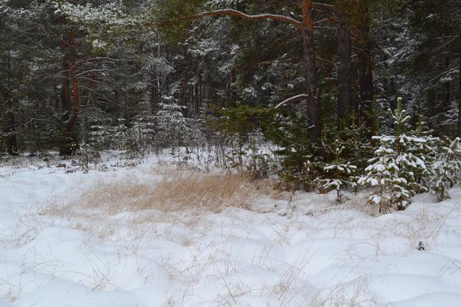 кочки_под_снегом_kochki_pod_snegom