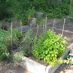 2012_06_03_Community_Garden_Patch