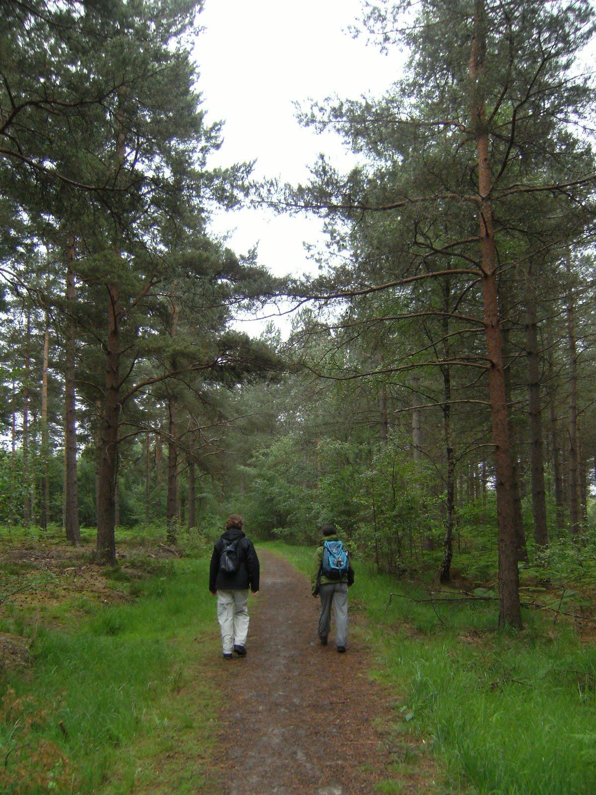 DSCF8232 Through Broadwater Forest