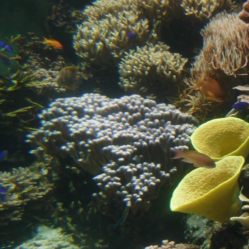 Aquarium_26.jpg