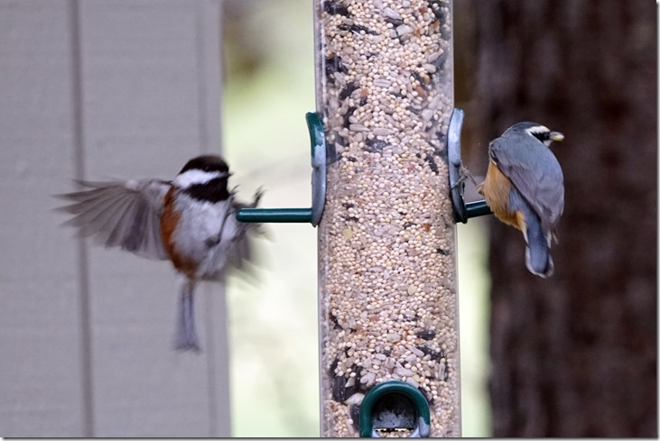 lopez birds on feeder 122417 00001