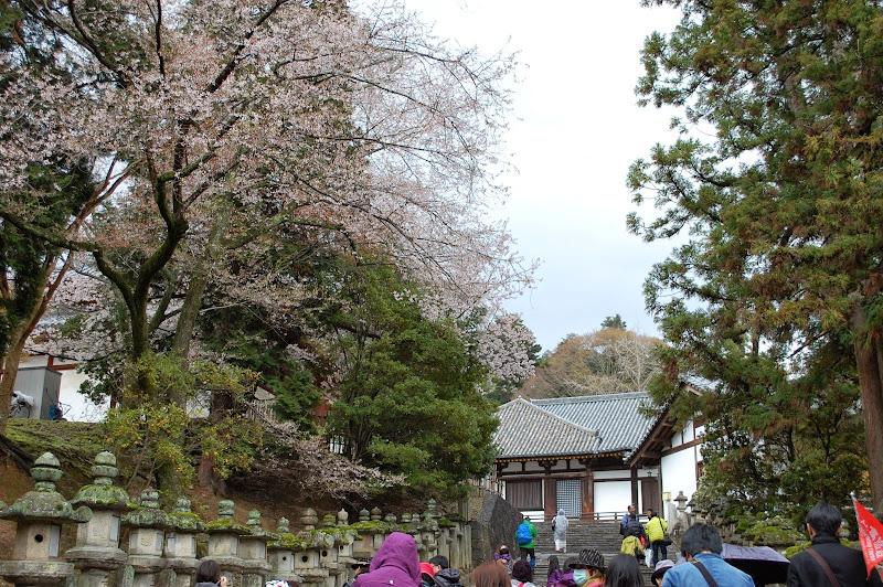 2014 Japan - Dag 8 - jordi-DSC_0563.JPG