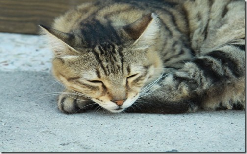 22 fotos de gats (42)