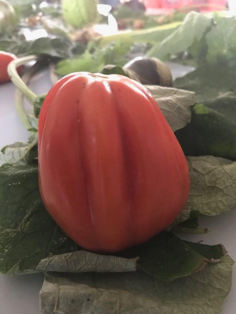 Vergeten groenten - IMG_8729.JPG