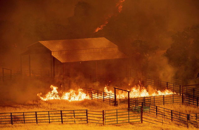 Flames rise around an outbuilding as the County fire burns in Guinda, California, 1 July 2018. Evacuations were ordered as dry, hot winds fueled a wildfire burning out of control Sunday in rural Northern California, sending a stream of smoke some 75 miles (120 kilometers) south into the San Francisco Bay Area. Photo: Noah Berger / AP Photo