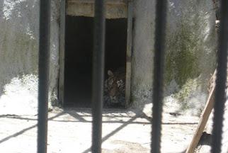 Petrol Ofisi arkası Hayvanat Bahçesi - Batman.jpg