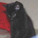 Onze nieuwe poes Kitty!