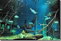 aquario-gigante-de-bh