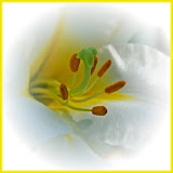 """""""Easter Lily"""" by Barbara Lippert"""