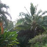 Hawaii Day 5 - 114_1372.JPG