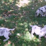 babies @ 5 weeks
