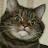 Dustin Brundeen avatar image