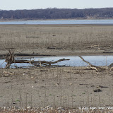 01-19-13 Hagerman Wildlife Preserve and Denison Dam - IMGP4062.JPG