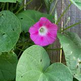 Gardening 2010, Part Two - 101_2376.JPG