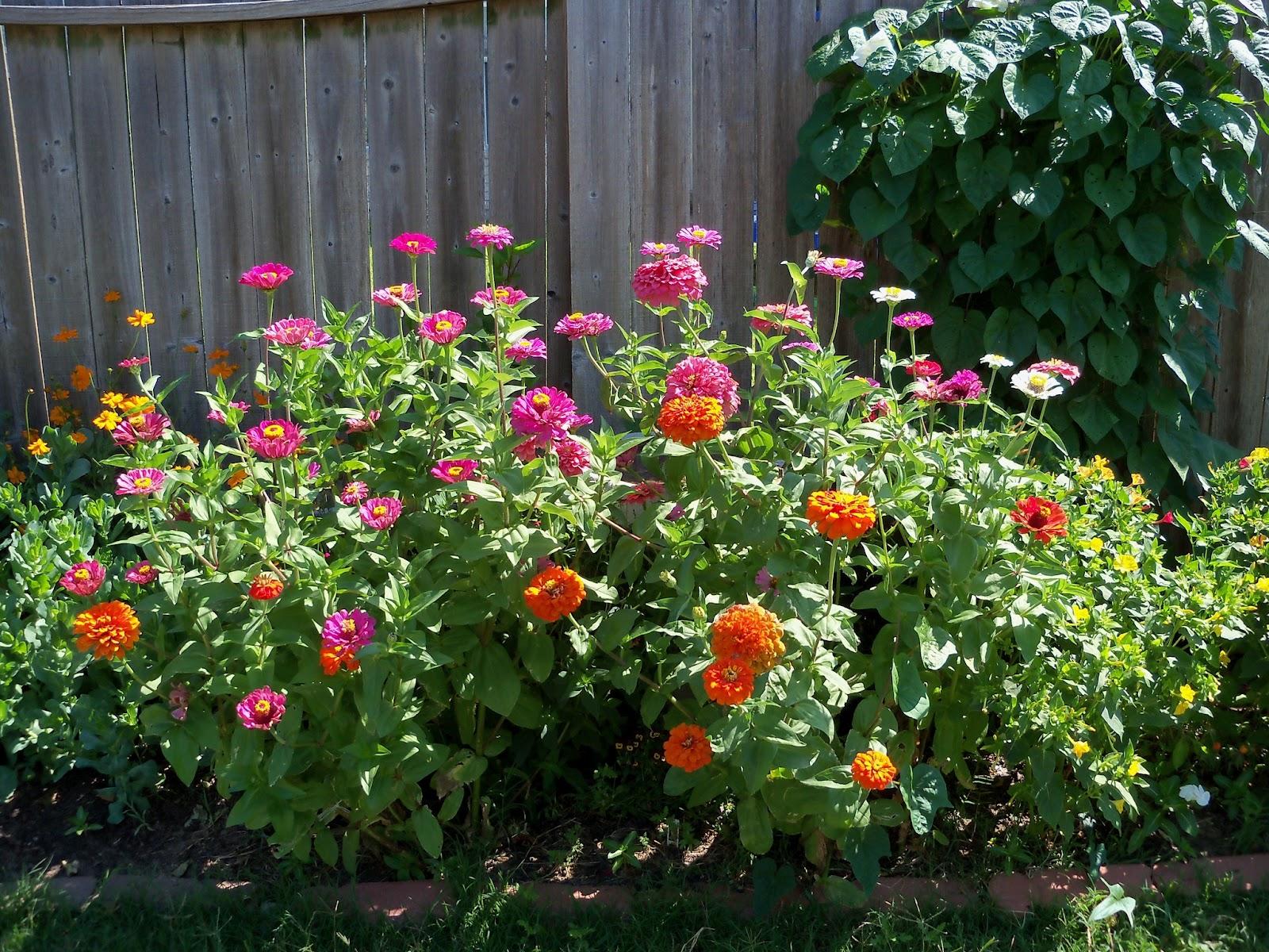 Gardening 2011 - 100_9000.JPG