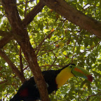 Tucanes del zoológico de Isla Palma