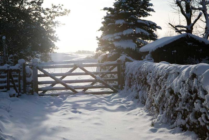 snow2010-5