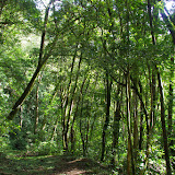 Forêt des nuages. Mount Totumas, 1900 m (Chiriquí, Panamá), 23 octobre 2014. Photo : J.-M. Gayman