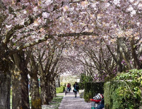 Salem Capital Gardens1
