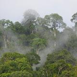 Piste de Coralie (Guyane) : l'ancien site d'orpaillage après la pluie. 26 novembre 2011. Photo : J.-M. Gayman